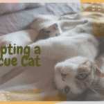 Adopting a Rescue Cat