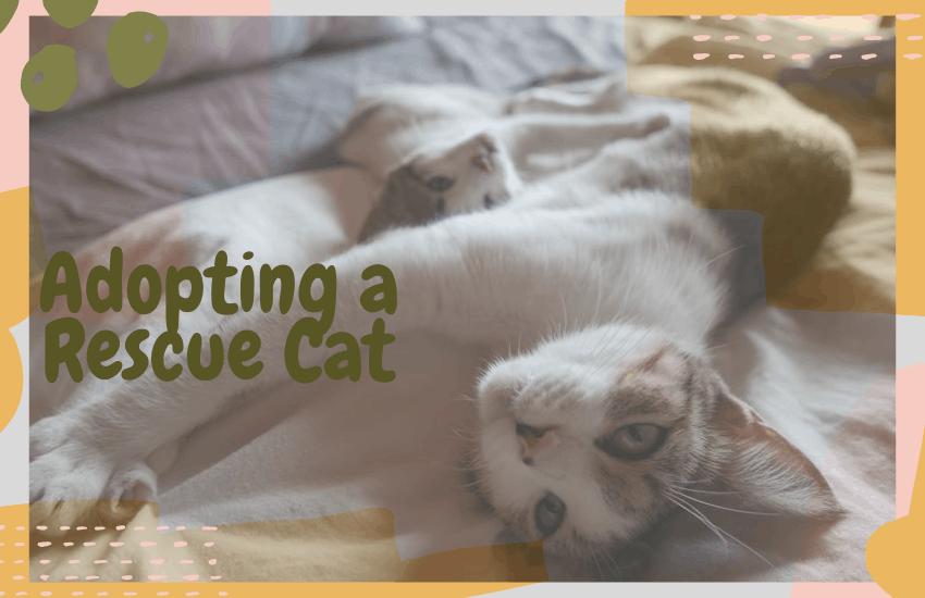 Adopting a Rescue Cat
