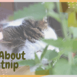 All About Catnip