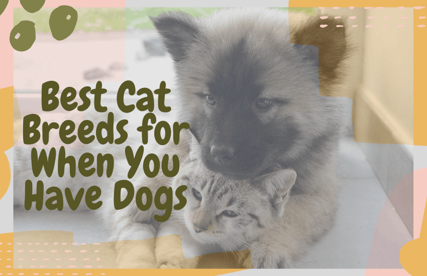 Best Cat Breeds for When You Have Dogs