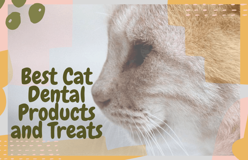 Best Cat Dental Products and Treats