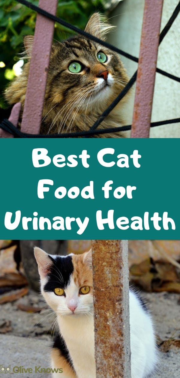 Best Cat Food For Urinary Health Oliveknows