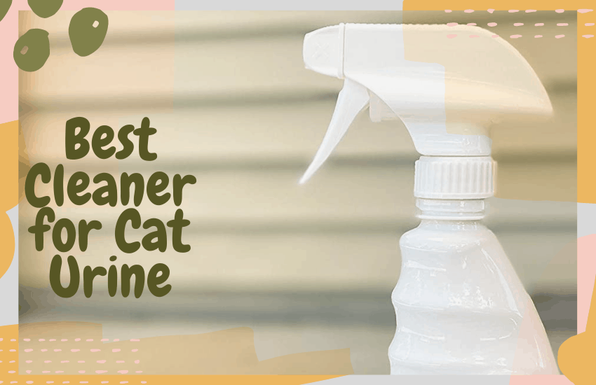 Best Cleaner for Cat Urine