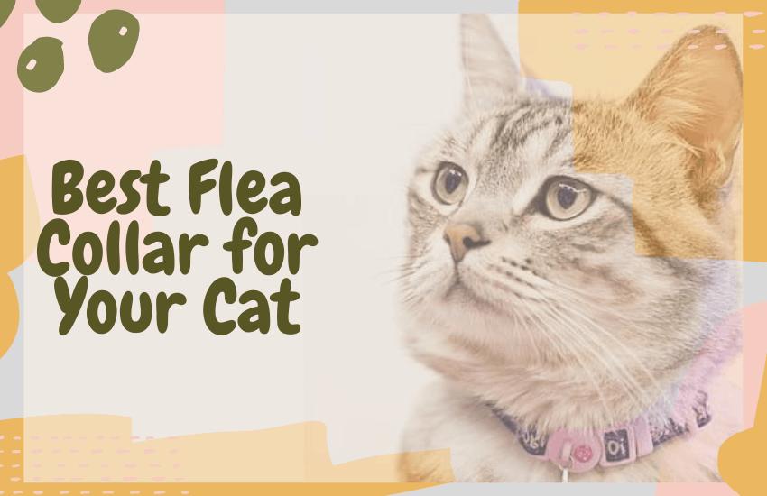Best Flea Collar for Your Cat