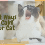 Best Ways to Calm Your Cat