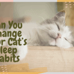 Can You Change Your Cat's Sleep Habits