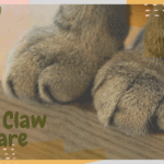 Cat Claw Care