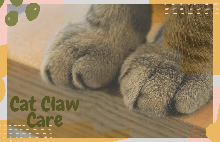 Cat Claw Care
