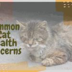 Common Cat Health Concerns