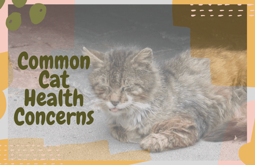 Common Cat Health Concerns