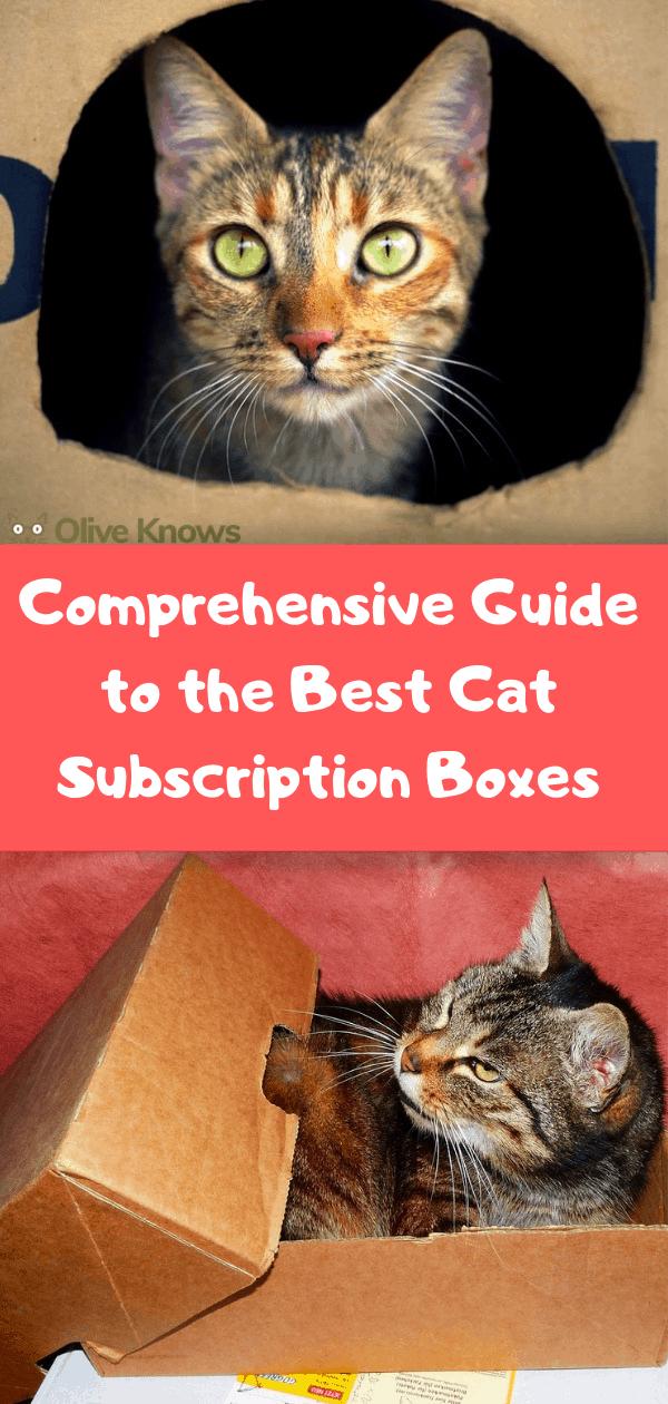 Comprehensive-Guide-Subscription-Box-Cat