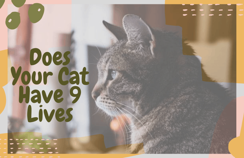 Does Your Cat Have 9 Lives