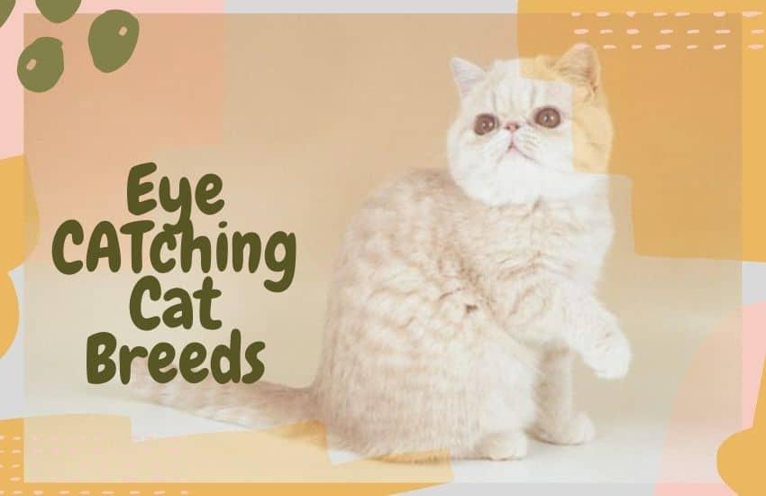 Eye CATching Cat Breeds
