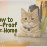 How to Cat-Proof Your Home