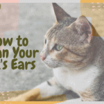 How to Clean Your Cat's Ears