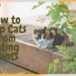 How to Keep Cats from Eating Plants