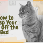 How to Keep Your Cat Off the Bed