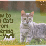 How to Stop Cats from Littering your Yard
