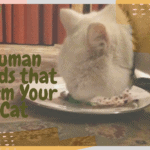 Human Foods that Harm Your Cat
