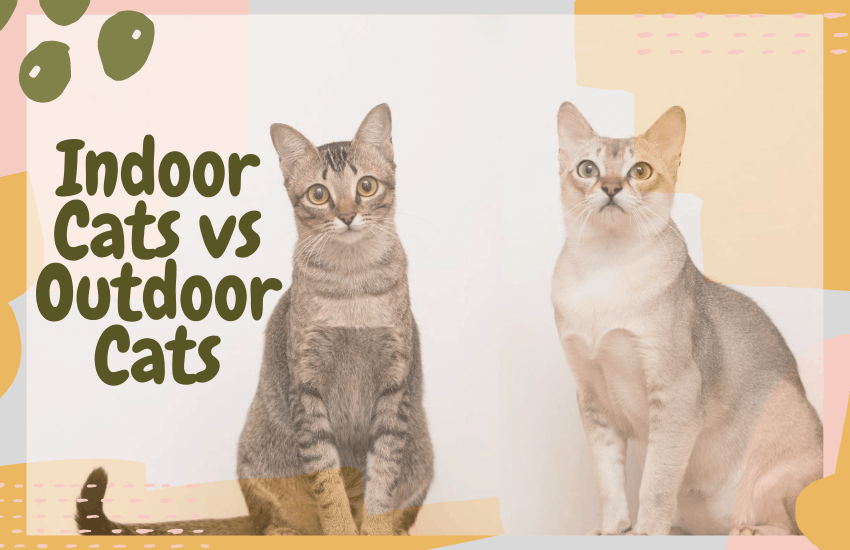 Indoor Cats vs Outdoor Cats