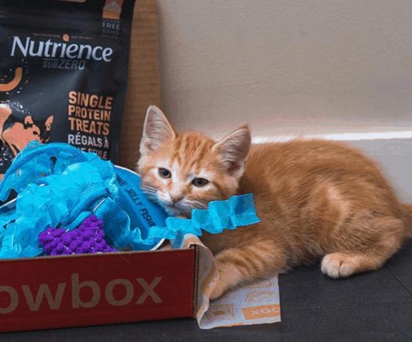 MeowBox-Cat-Subscription-Box