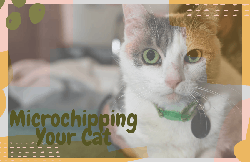 Microchipping Your Cat
