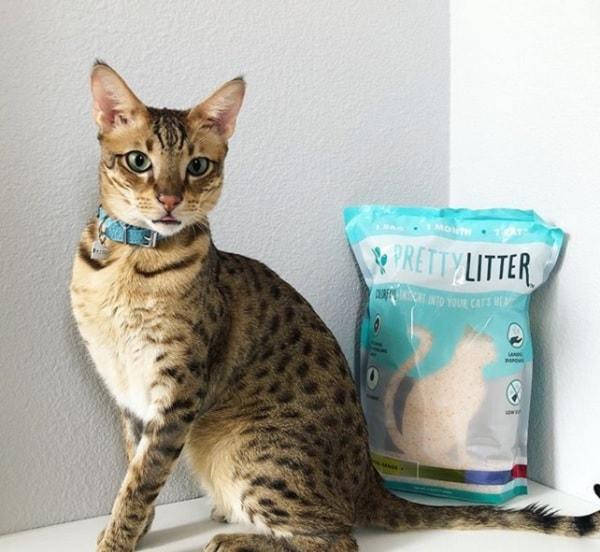 PrettyLitter-Cat-Litter-Subscription