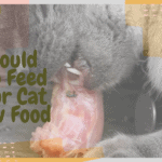 Should You Feed Your Cat Raw Food
