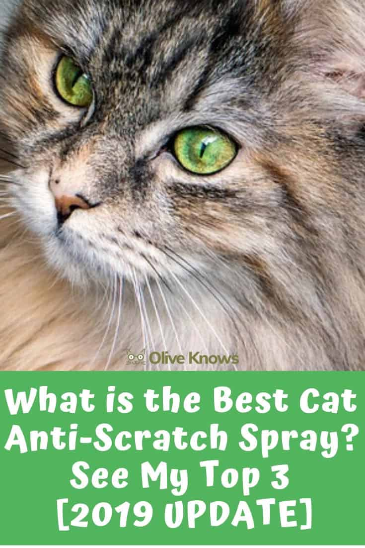 What is the Best Cat Anti-Scratch Spray? See My Top 3 [2019
