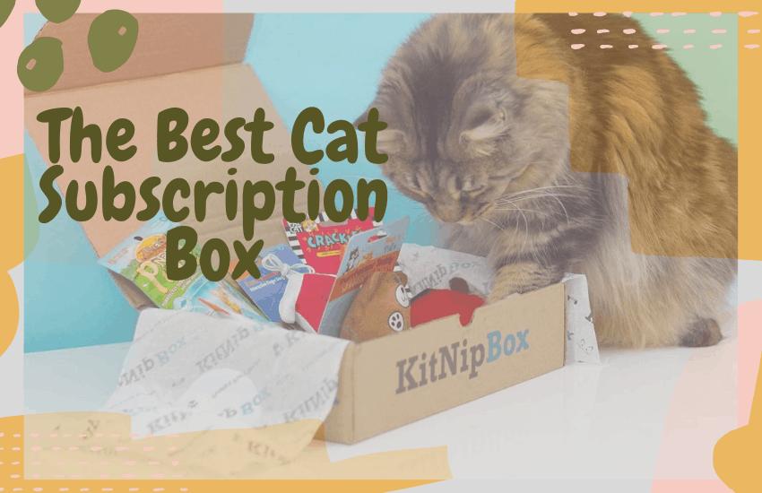 The Best Cat Subscription Box