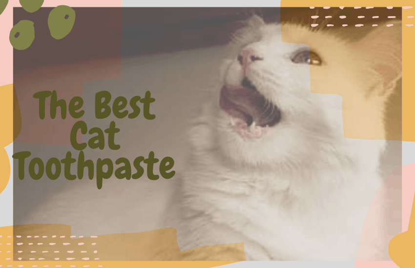 The Best Cat Toothpaste
