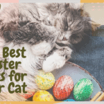 The Best Easter Gifts for Your Cat