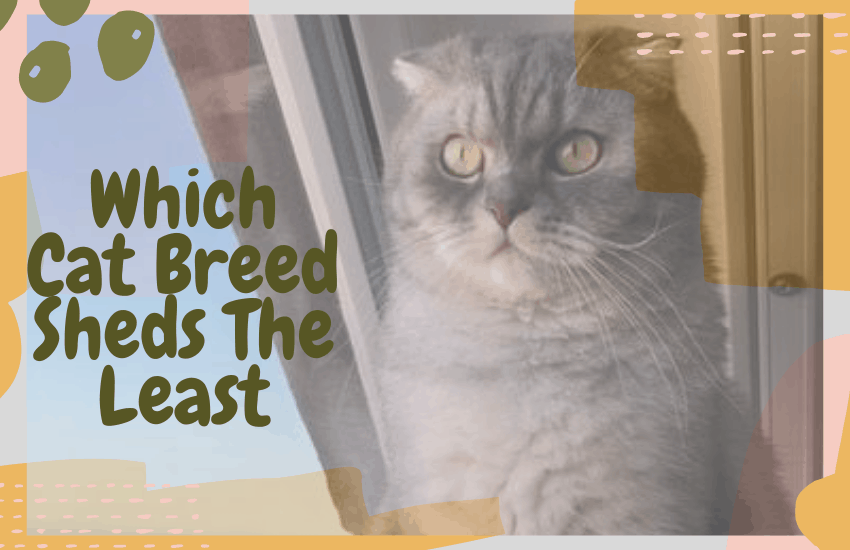 Which Cat Breed Sheds The Least