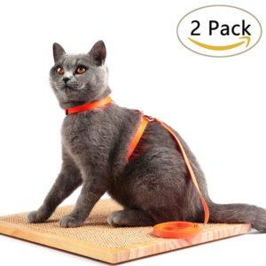 avolare-cat-harnais