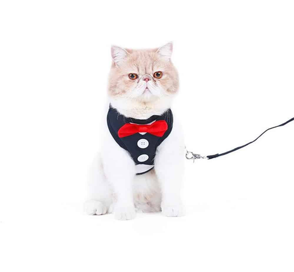 delifur-cat-harnais
