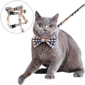 mihachi-cat-harnais