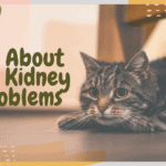 All About Cat Kidney Problems