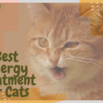 Best Allergy Treatment for Cats