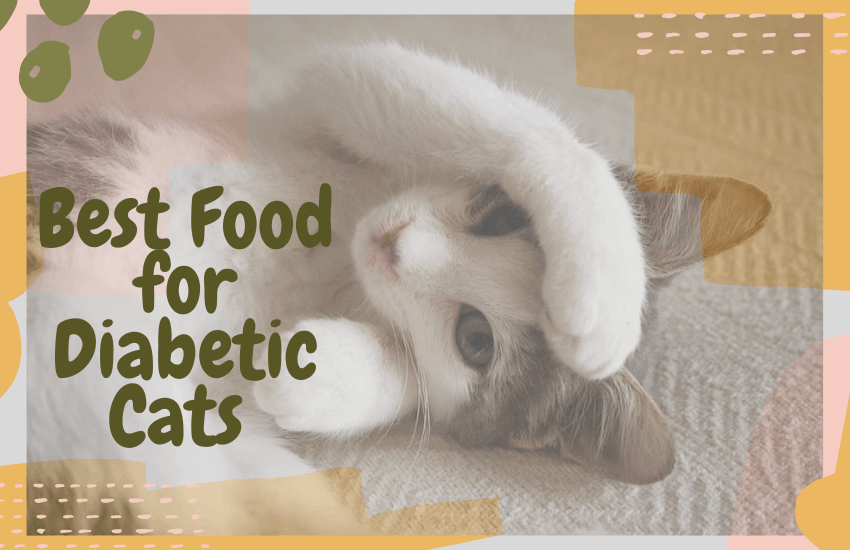 Best Food for Diabetic Cats