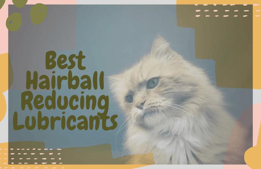 Best Hairball Reducing Lubricants