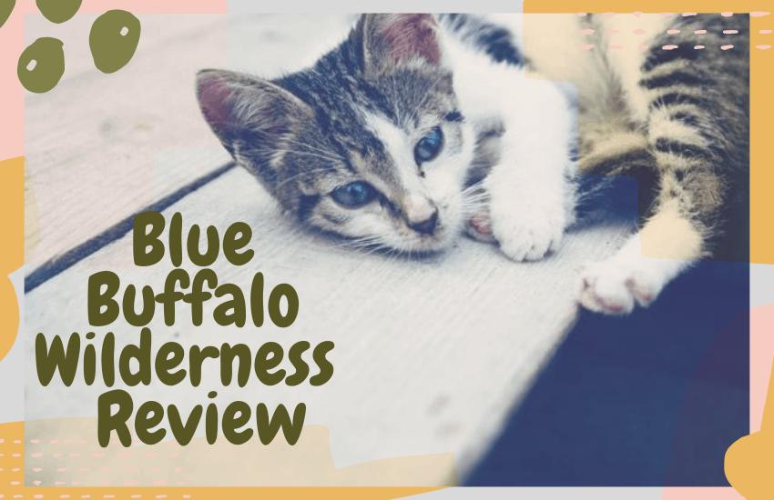 Blue Buffalo Wilderness Review