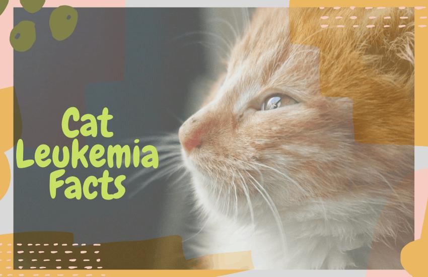 Cat Leukemia Facts