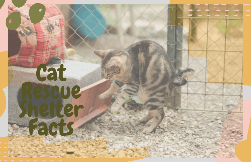 Cat Rescue Shelter Facts