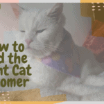 How to Find the Right Cat Groomer