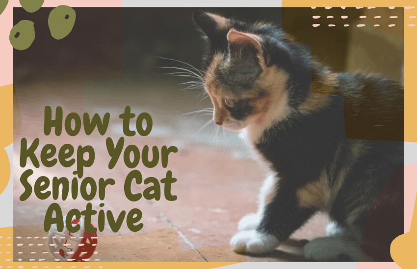 How to Keep Your Senior Cat Active