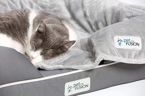 Petfusion Premium Cat Bed
