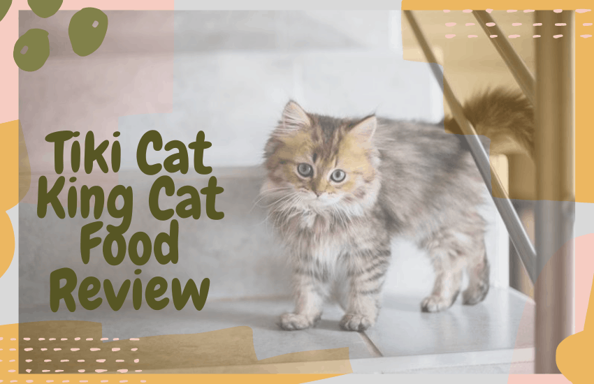 Tiki Cat King Cat Food Review