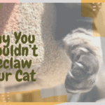 Why You Shouldn't Declaw Your Cat