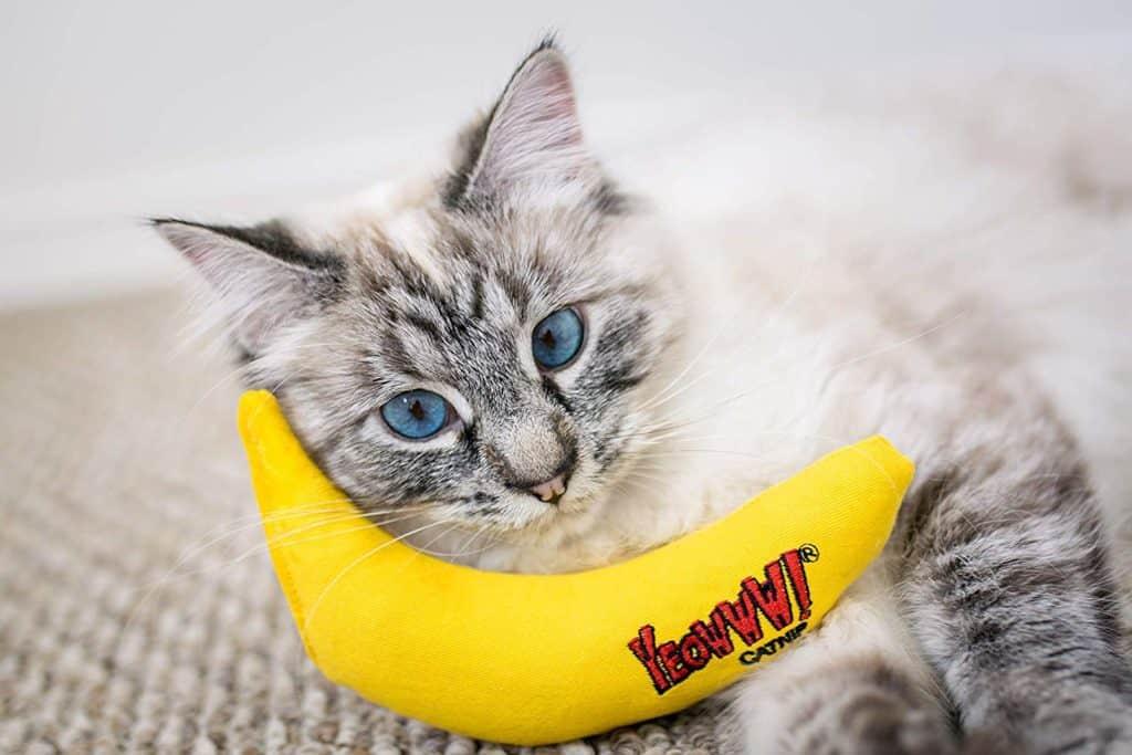 yeoww catnip toy