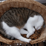Best-Cat-Beds